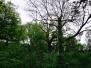 Clapham Woods, Sussex, England