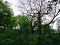 Clapham Woods, Sussex