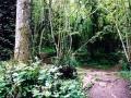 Haunted Clapham Woods, Sussex
