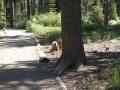 Donner Pass, California, U.S.A