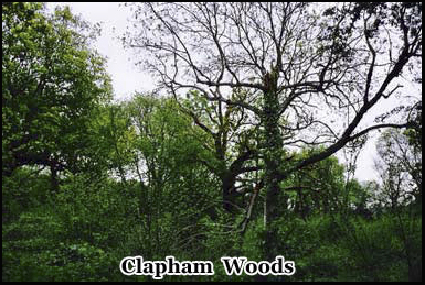 The mysterious Clapham Woods, location of occult activity