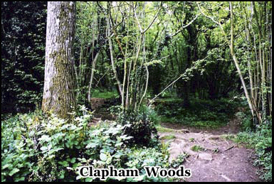 """The center of the paranormal activity in Clapham Woods takes place in the """"Chestnuts"""""""