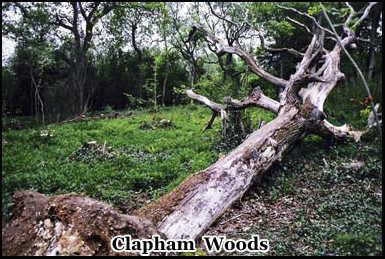 The area around the woods is famous for ghosts, UFO's and devil worship